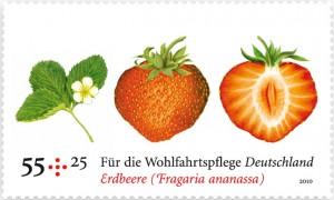 WOM_erdbeere1-300x180