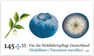 WOM_heidelbeere1-300x180